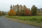 Červené dřevo (Rothenbaum)