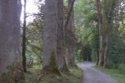 Fichtenbach (Bystřice / Fuchsova huť)