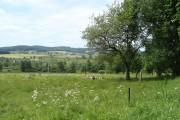 Jedlina (Neu Losimthal)