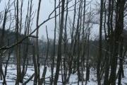Lučina (Sorghof)